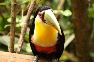 Img_1290_small_birds