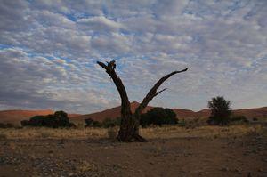枯れ木と雲と砂丘