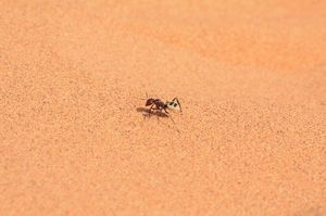 7_ant
