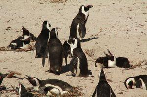 3_penguin