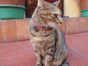 1_cat
