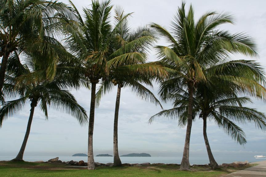 南国らしい椰子の木?